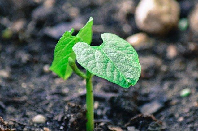 zelený výhonek